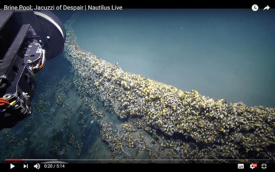 lago en el fondo del Golfo de Mexico